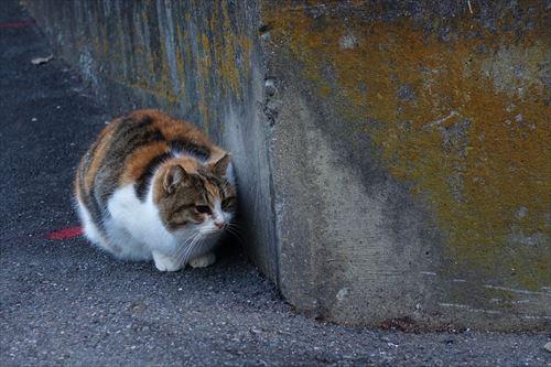 (帰りの坂道で、出会った寒そうな猫背(笑)の野良猫・・。